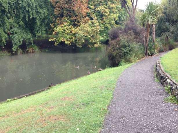 NZ Botanic Garden birds Ducks