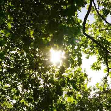 Summer sky through tree