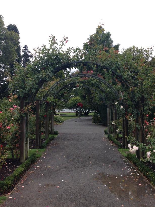 NZ rose arbor - 1