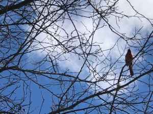 Bird robin tree sky - 1