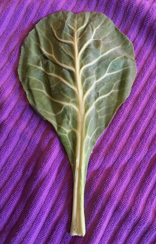 Green leaf of collard laid out on a purple towel